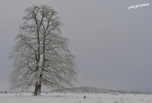 Arbre en hiver 9