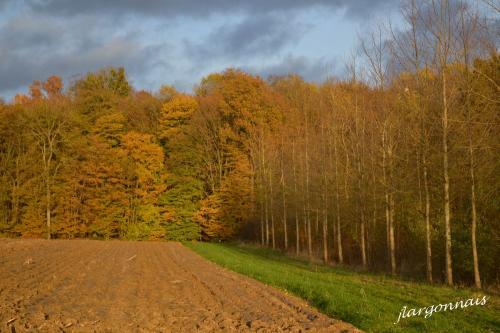 Argonne automne 10 2014