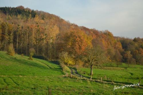 Argonne automne 4 2014