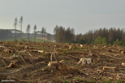 Bois de la gruerie scolytes 2021 o9 25 10