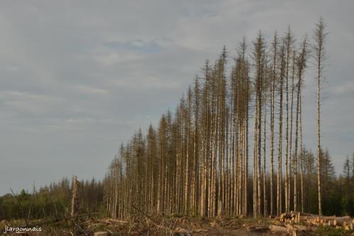 Bois de la gruerie scolytes 2021 o9 25 11