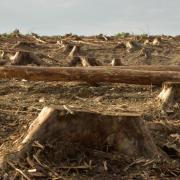 Bois de la gruerie scolytes 2021 o9 25