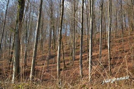 Chemins gouraud et cote nd 2017 02 18 1