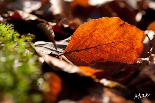 Couleurs automne 2 2014 12 18