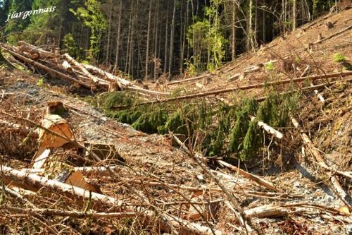 Exploitation forestiere 2018 07 4
