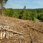 Exploitation forestiere 2018 07 5