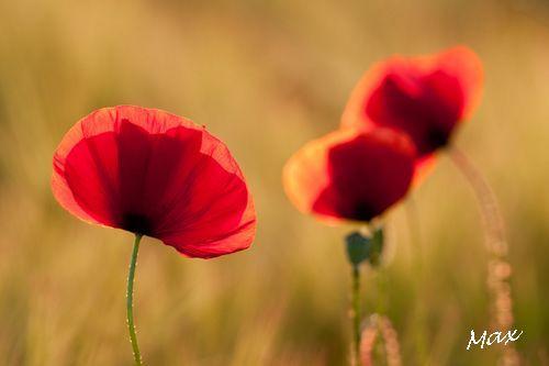 Fleursprint1505 010c