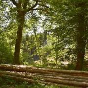 Foret rarecourt beaulieu en argonne 2020 05 10