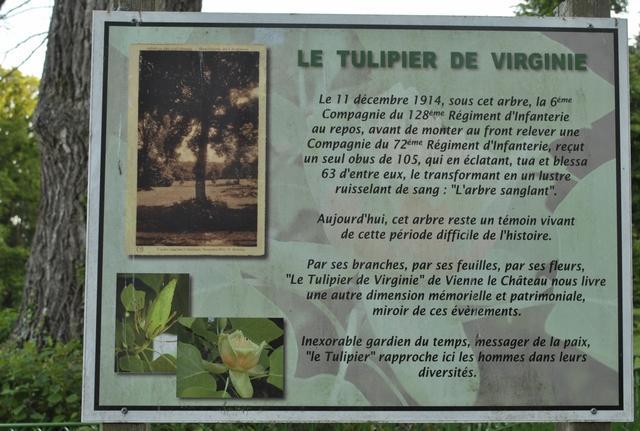 Le tulipier 2019 05 30 4