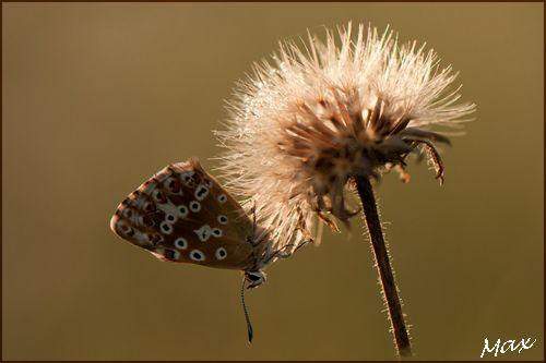 Papillons1408 102c