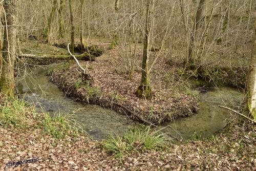 Ruisseau des marotines 2021