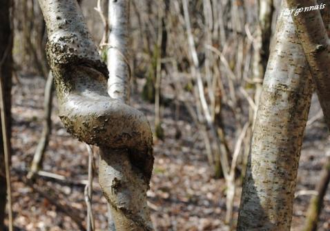 Sculptures naturelles