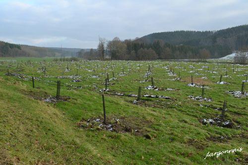 Vallee de la biesme plantation 2 2015 11 01